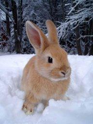 SnowBunnie